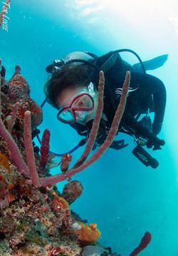 a scuba diver with a seahorse