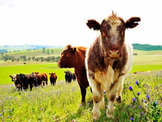 Are you interested in buying a box of bulk organic beef cuts straight from the farmer?