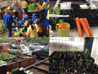 My Organic School's 'Healthy Eating' classes are underway at Bronte Public School.