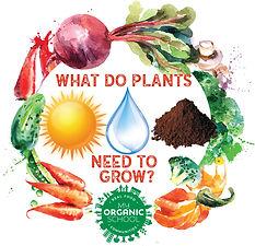 plants nned to grow ig.jpg