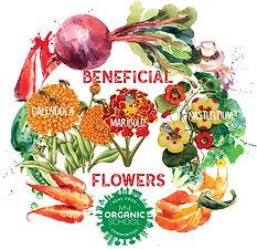 beneficial flowers ig.jpg
