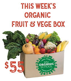 THIS WEEK'S FRUIT AND VEGE BOX.jpg