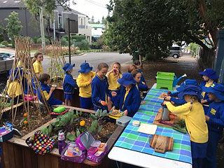 school vegetable garden, healty eating, raisd veggie bed