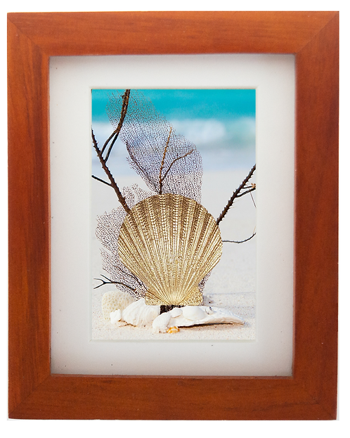 Bronze Shell Sculpture Shadow Box