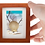 Thumbnail: Bronze Shell Sculpture Shadow Box