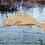 Thumbnail: Bronze Redfish Sculpture Shadow Box