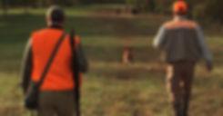 Brittany Spaniel hunting pheasants