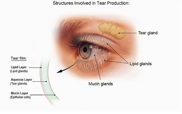 TearsDiagram (2).jpg