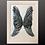 Thumbnail: Serene Angel Wings-Framed