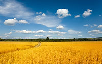 Wheat-Fields-1920X1200-Wallpaper-1.jpg