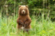 FULLFRAME GRIZZLY CUB STANDING.jpg