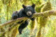 FULLFRAME CUB IN TREE.jpg