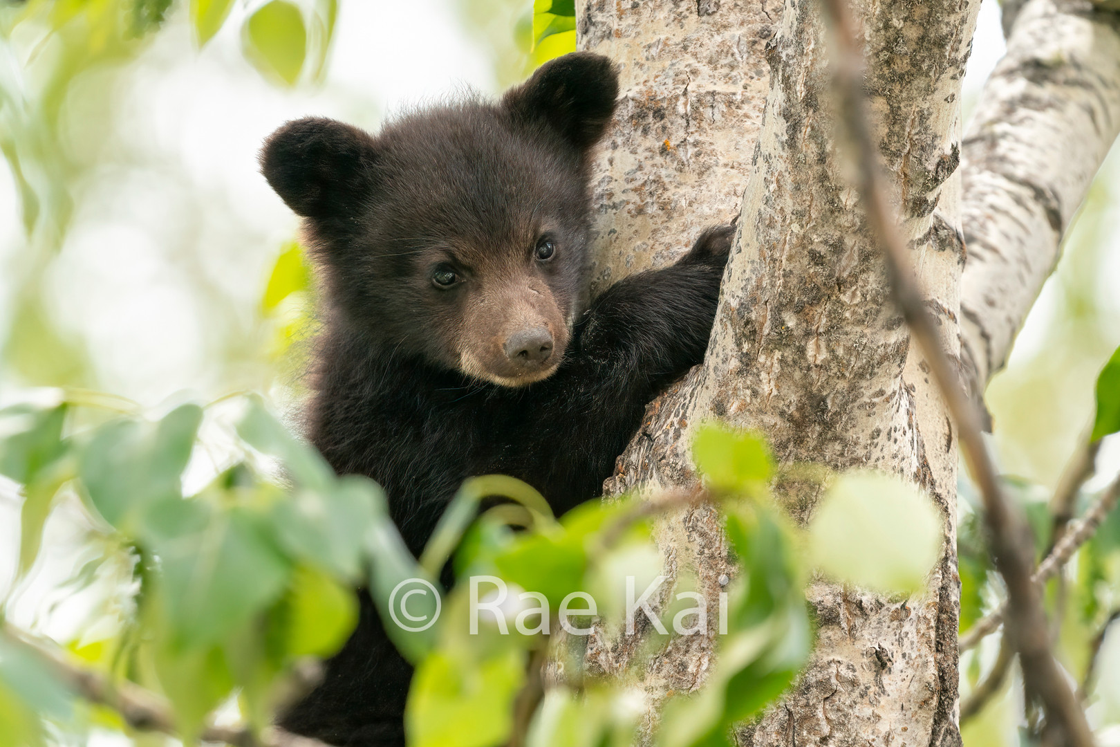 Tree Climber Closeup.jpg