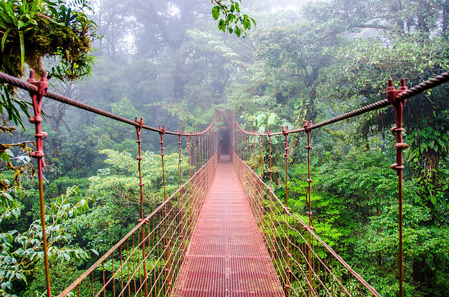 Bridge in Rainforest - Costa Rica - Mont