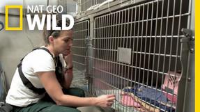 Nat Geo Wild: Animal Storm Squad