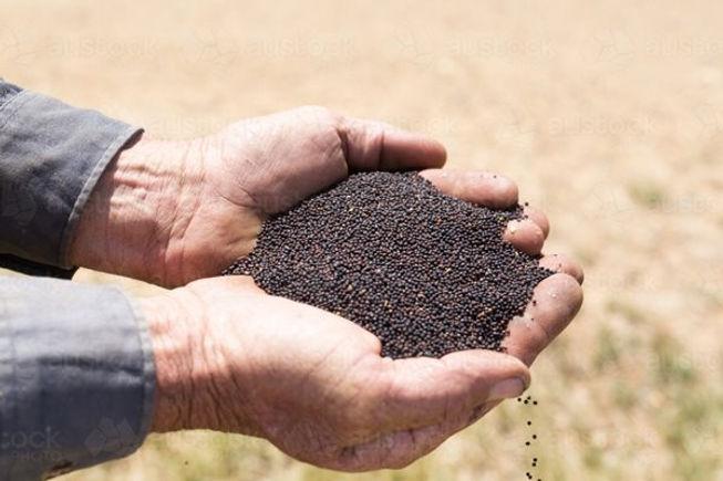 man-holding-canola-seeds-austockphoto-00