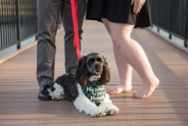 engagement couple dog pet columbia missouri