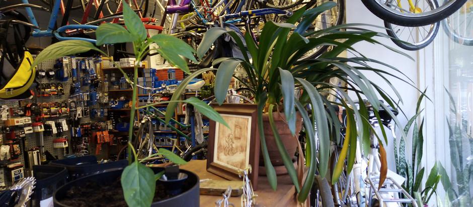 Plants of Töpy