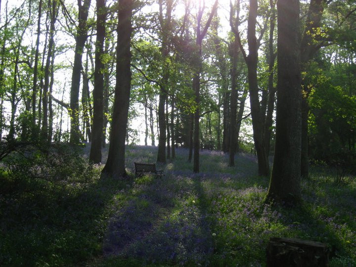 New Forest 2011
