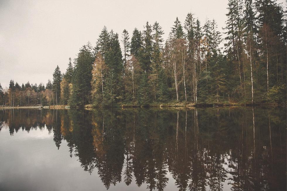 Forest Lake_edited_edited.jpg