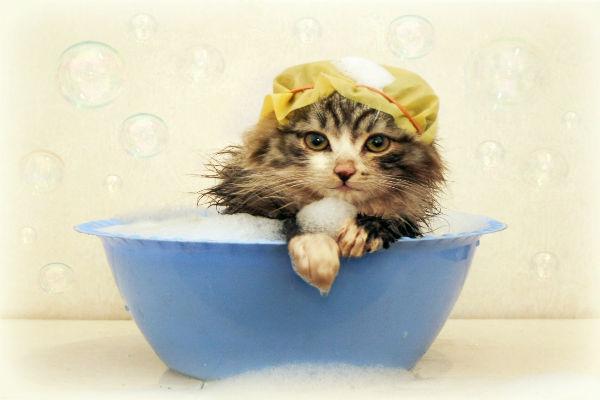 Banho de Gato