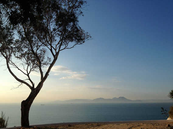 Tree and see on Tunisian coast