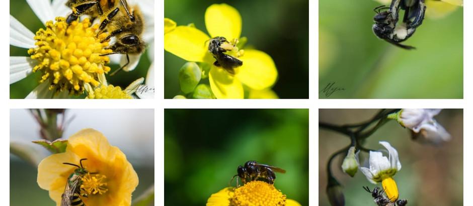 Diversidad de plantas y abejas
