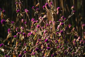 Floración silvestre