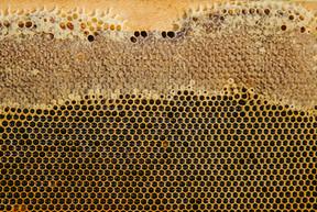Miel BeeHub Guate