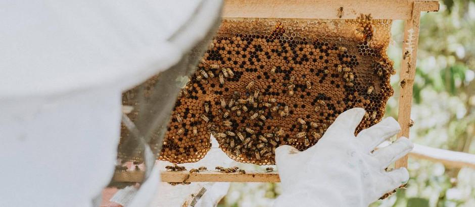 Una apicultura a la inversa