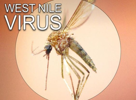 Nile Virus Warning