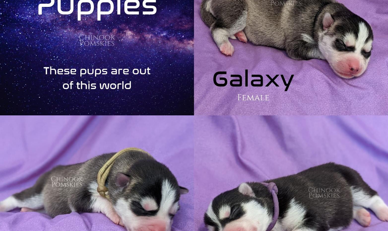 Galaxy 1.jpg