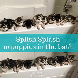 Bathing all the Olympus puppies at once