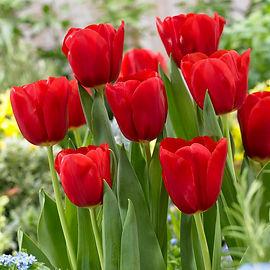 garden-state-bulb-flower-bulbs-hof18-08-