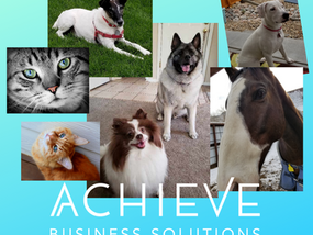 Pet Sitting Business Assistance