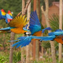 parrot-world-un-parc-animalier-immersif-