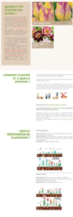- Bulbe _ conseils de plantation_ - http
