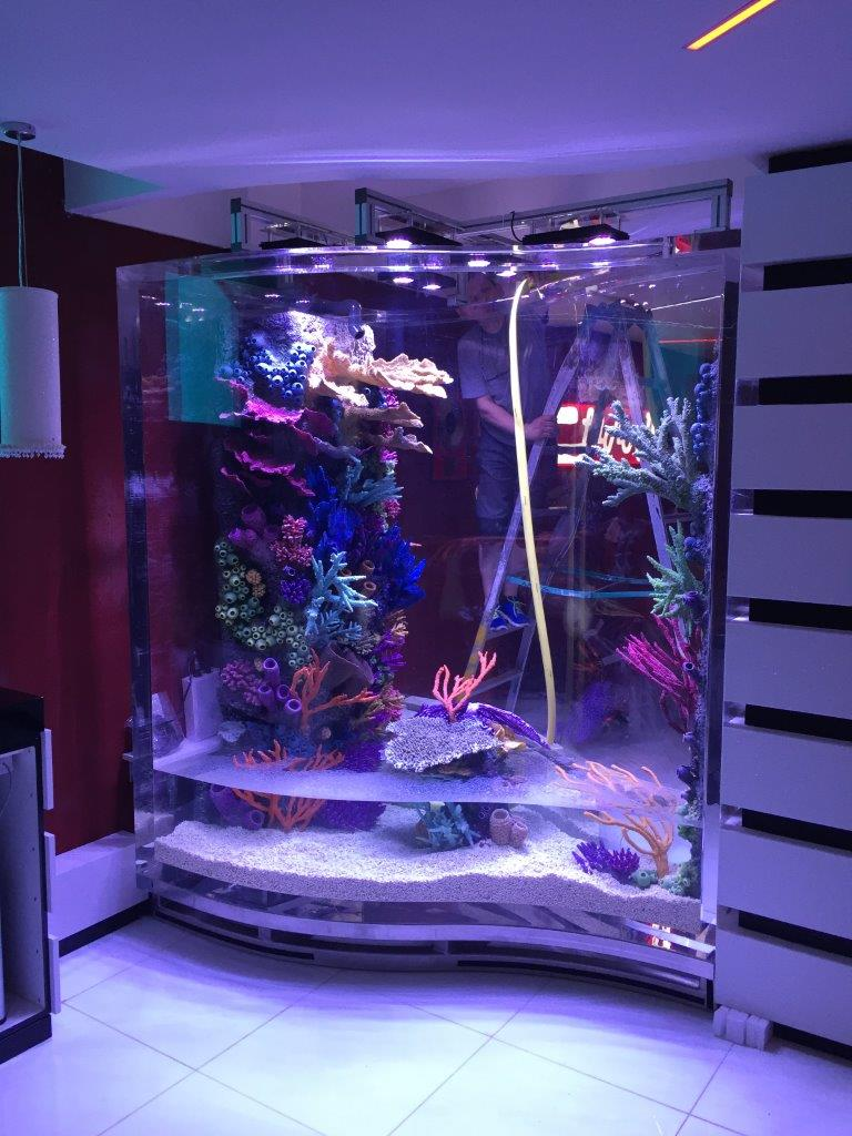 Aquarium filling up Rocknreefs