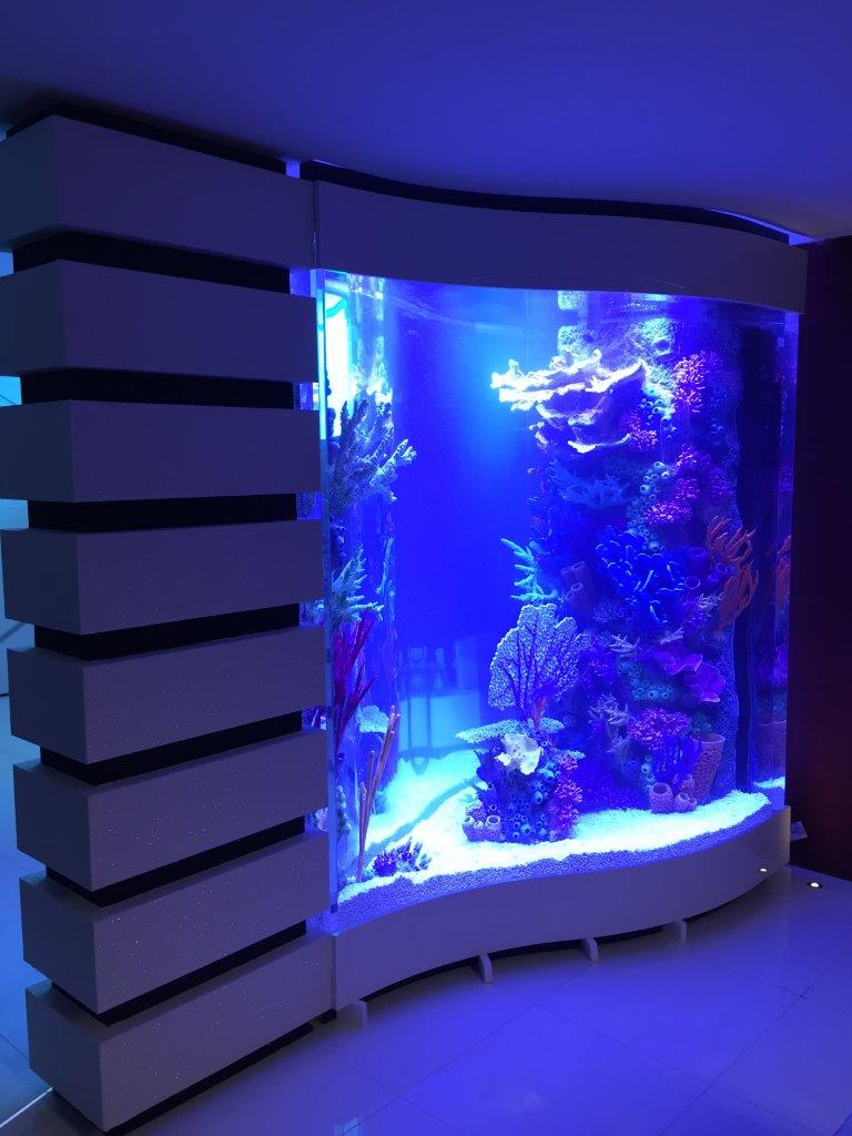 Set up custom aquarium with RocknRee