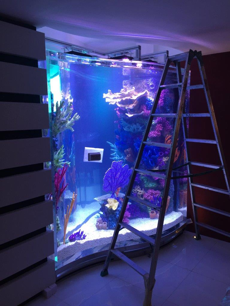 Aquarium setup in Private residence