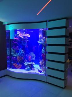 Rocknreefs insert in filled aquarium