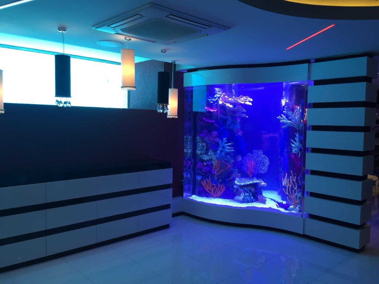 Rocknreefs insert in filled aquarium