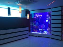 Aquarium in private residence