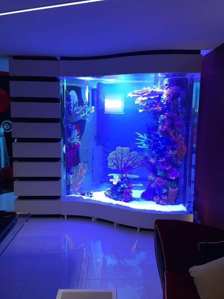 Aquarium in private residence