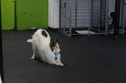 Canine Freestle
