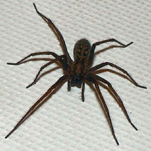 Are you in need of some serious phobia relief? -