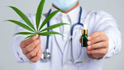 Asaya and medical cannabis care in the era of personalised medicine