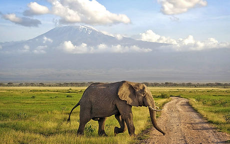 kenya_safari-elephant_amboseli.jpg