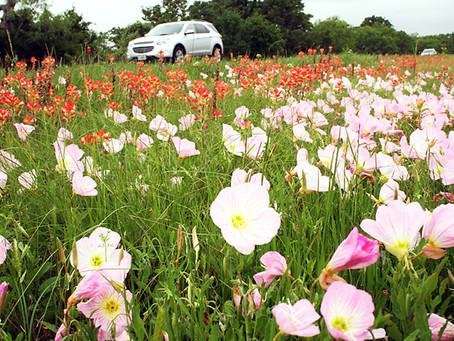 野花が満開、ヒルカントリー:フレデリックスバーグ(テキサス)①