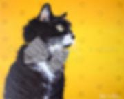 Peinture chat artiste peintre animalier chat